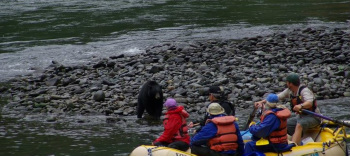 Black Bear on the Rogue River.